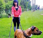 فرانسه | سگهای شکاری زن باردار را دریدند