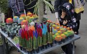 برپایی نمایشگاه گل های تزیینی در فرهنگسرای اندیشه