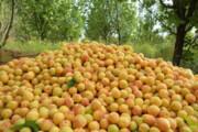 ابرکوه نیازمند ایجاد شهرک تولید و فرآوری محصولات کشاورزی است