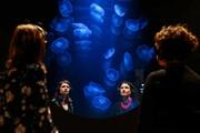عکس روز: چیدمان عروس دریایی
