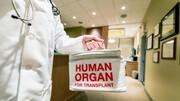 مرگ بیمار به علت خطای جراح پیوند؟ | کبد پیوندی آلوده شده جان بیمار را گرفت