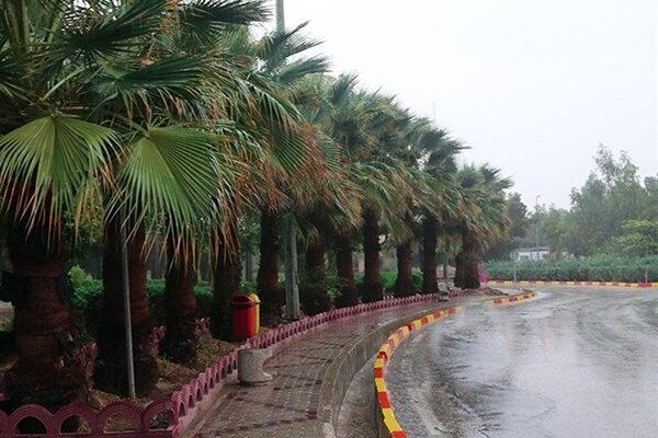 باران بوشهر
