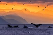نجات نهنگها؛ کلید مقابله با تغییرات اقلیمی