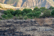کاهش ۳۰ درصدی حریق در جنگلها