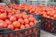 افزایش قیمت گوجه و پیاز فصلی است