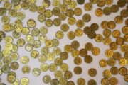 سکههای صفوی کشف شده در ایجرود تقلبی است