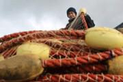 تصویر   صید ماهی استخوانی در سرمای استخوانسوز خزر