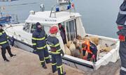 تلاش امدادگران اروپایی برای نجات جان ۱۴۶۰۰ گوسفند