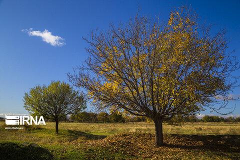 پاییز قزوین