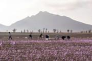 خسارت ۱۳۲ میلیارد ریالی کشاورزان خراسان شمالی در پاییز