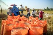 تولید برنج در ایران؛ جایگاه و رتبهها