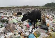 هشدار؛ برای دیدن حیات وحش ایران به سایتهای زباله بروید