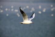 تصویر | مهاجرت پرندگان به تالاب عشق آباد