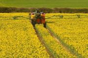لزوم کاشت بذرهای مقاوم در مقابل کمآبی