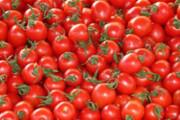 تشریح دلایل افزایش قیمت گوجهفرنگی