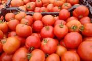 سوء مدیریت؛ عامل گرانی گوجهفرنگی