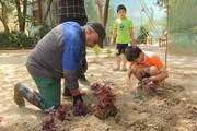 کاشت ۵ هزار درختچه جدید در پیادهروهای منطقه۱۸
