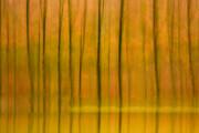 عکس | پاییز در مناطق دودانگه و چهاردانگه ساری