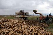 ۷۷ درصد مطالبه چغندرکاران آذربایجانغربی پرداخت شد