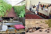 اعتبار ۱۵۰ میلیارد تومانی برای اشتغال روستایی