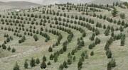 بهرهبرداری از ۱۳۰۰ هکتار جنگلکاری در اسفند | کاشت هزار اصله درخت کهنسال در خیابان ولیعصر(عج)
