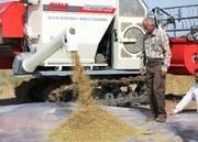برنج خوزستانخریدار ندارد