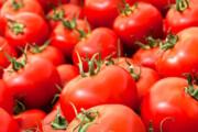 قیمت گوجه فرنگی در مسیر کاهش