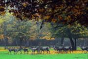 وجود ۵۰۰۰ راس حیوان علفخوار در پارک ملی گلستان