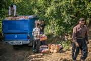 افزایش ۶۰ درصدی تولید محصولات باغی در مهاباد