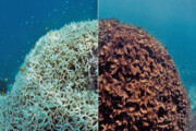 ترمیم صخرههای مرجانی با استفاده از بلندگوهای زیر آب