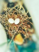 شکار  تخممرغ