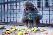 بازگشایی باغوحش مشهد