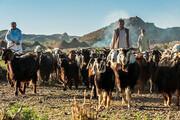 تخصیص ۳ میلیارد تومان اعتبار به عشایر سیستان و بلوچستان
