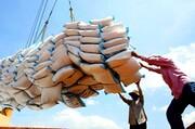 تکمیل شهرک صنفی برنج آمل به داد کشاورزان میرسد
