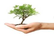 رئیس سازمان جنگلها: حاضرم چشمم را بدهم اما یک درخت قطع نشود