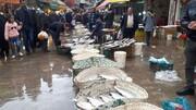 مسئول تایید سلامت ماهیان صید شده خزر چه نهادی است؟