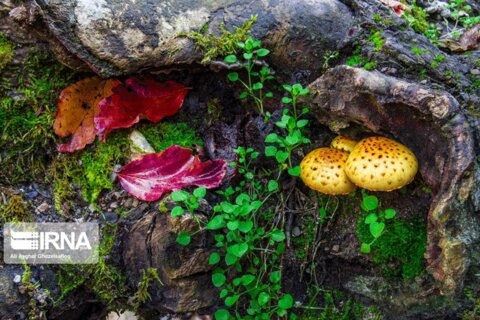 طبیعت پاییزه جنگلهای علیآباد کتول