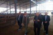 توزیع گوشت قرمز با قیمت مصوب در خراسان رضوی آغاز شد
