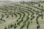 ۱۰۰ هزار نهال در عرصههای طبیعی استان تهران کاشته میشود