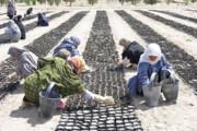 شهداد؛ دومین پایلوت اجرای پروژه بینالمللی ترسیب کربن در ایران