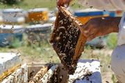 آذربایجان غربی با تولید بیش از ۲۱ هزار تن عسل رکوردار شد