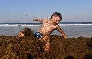 عکس روز: بازی در میان جلبکهای دریایی