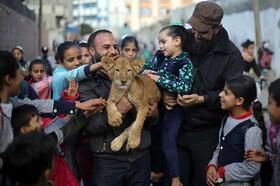 عکس روز: توله شیری در غزه