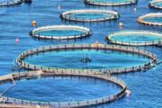 افزایش بهرهوری و تولید آذربایجان شرقی با پرورش ماهی در قفس