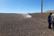 ۷۲ هزار هکتار از اراضی بوکان به کشت گندم اختصاص یافت