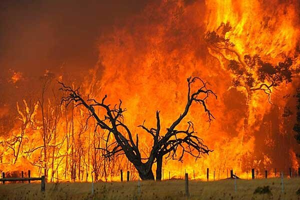 آتش استراليا