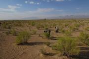 ۲۰۰ هکتار از عرصههای بیابانی سمنان درختکاری میشود