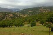 شهرداری با وزارت نفت در سرمایهگذاری پارک جنگلی یاسوج تعامل میکند