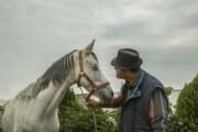 عکس | آرامش و احساس دین به اسبها