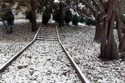 ریزش برف همدان را فرامیگیرد